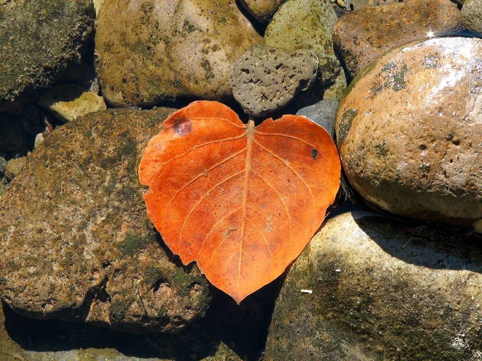 River Rock Mindfulness
