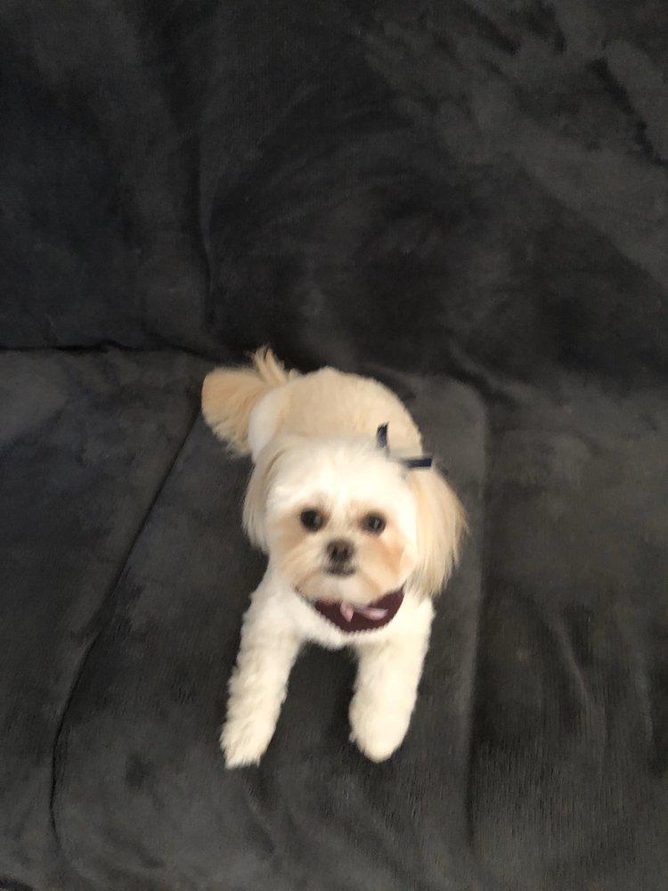 Diamond Dog Pet Salon & Boutique: 5529 SE 15th St, Del City, OK