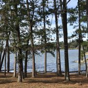 Boardwalk Trail Photo Of Lake Livingston State Park   Livingston, TX,  United States ...