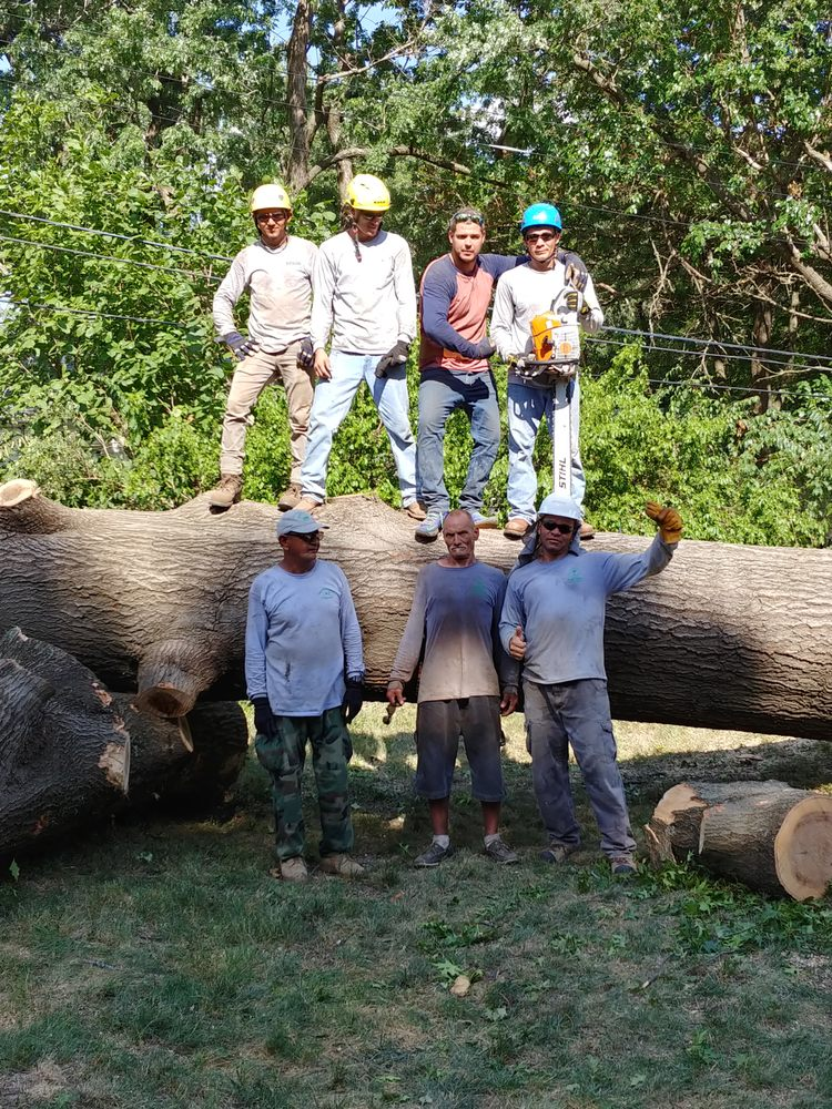 Martinez Tree & Lawn Service: Kansas City, MO