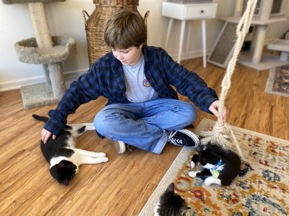 The Cat Lounge Rescue and Adoption Center: 1006 Torrey Pines Rd, San Diego, CA
