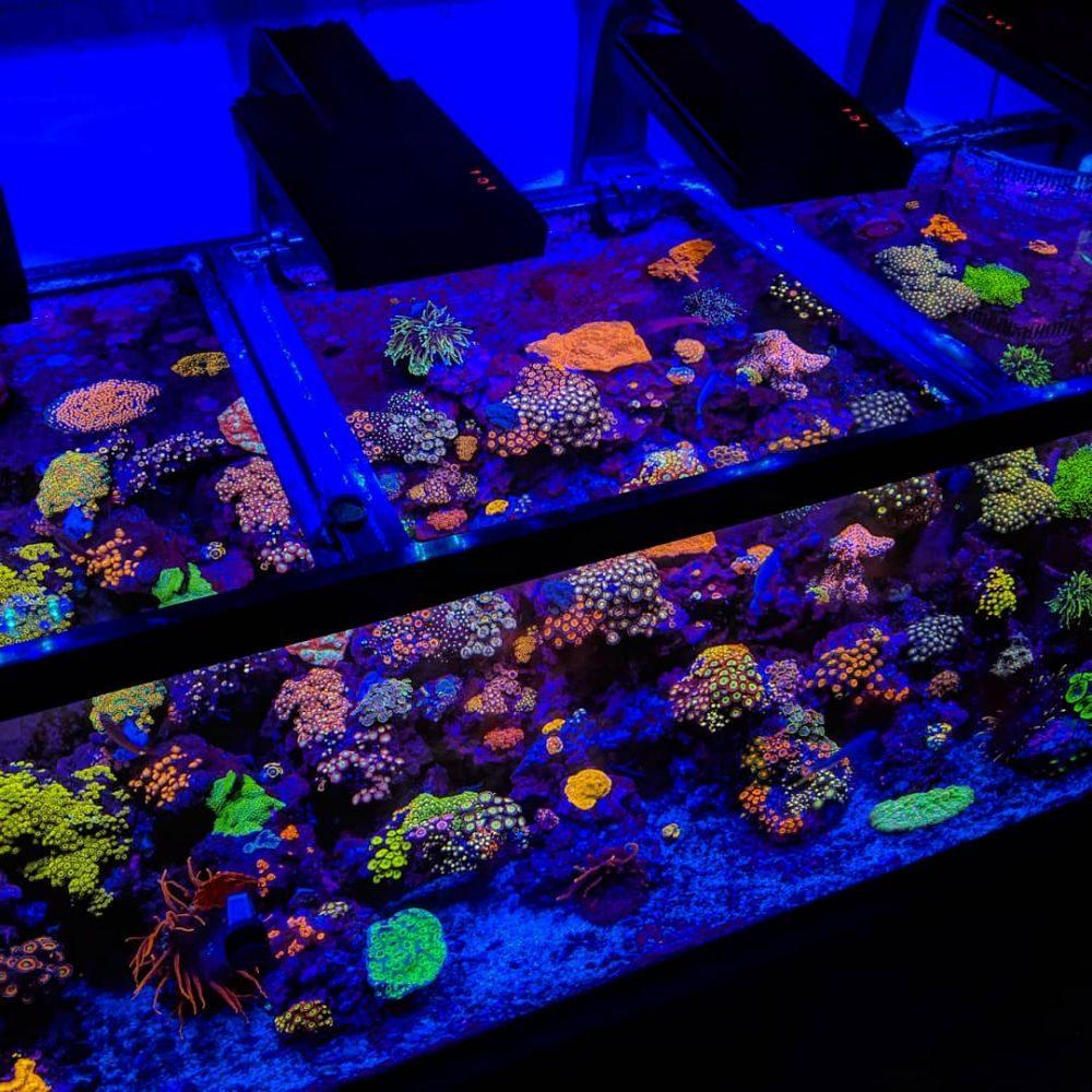 Palmetto Reef: 302 Charleston Hwy, West Columbia, SC