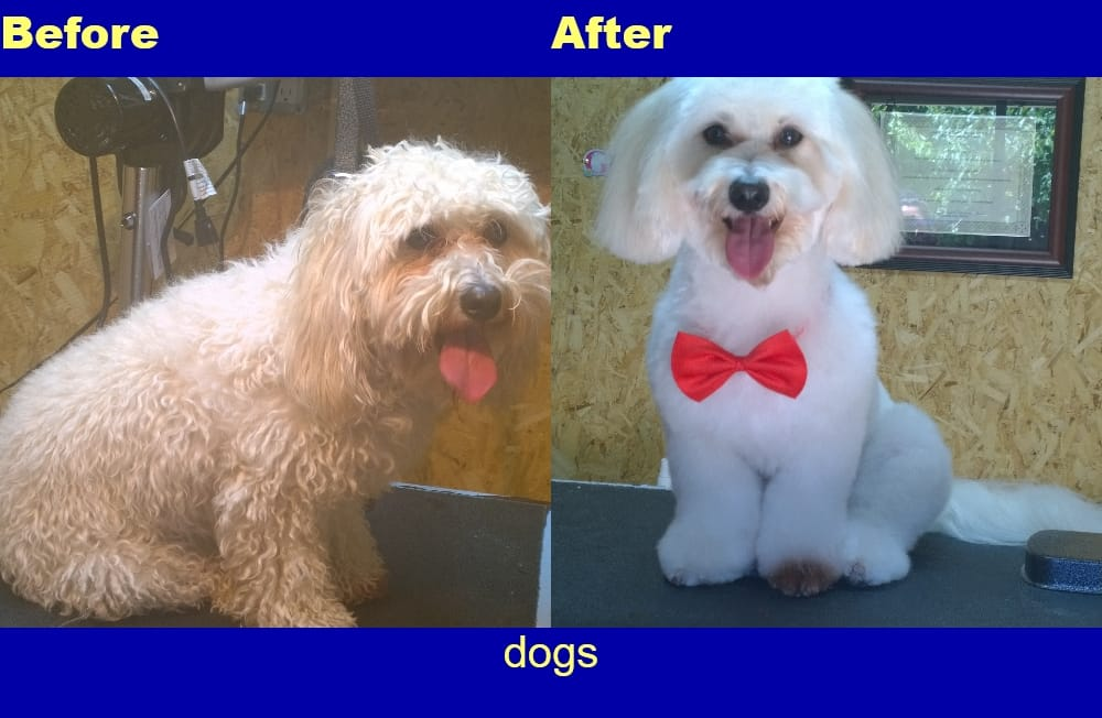 Photos for perfect pet salon yelp for A perfect pet salon