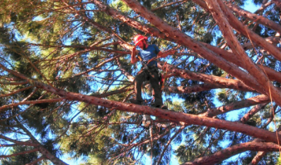 Tree MD Tree Care