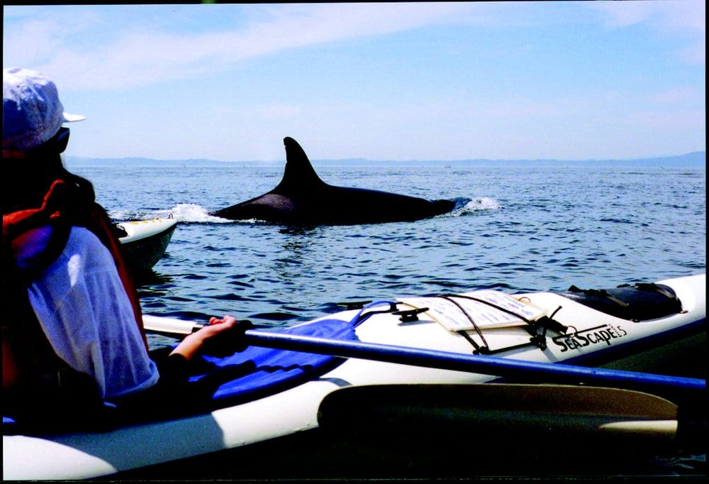 Outdoor Odysseys Kayak Tours: 86 Cedar St, Friday Harbor, WA
