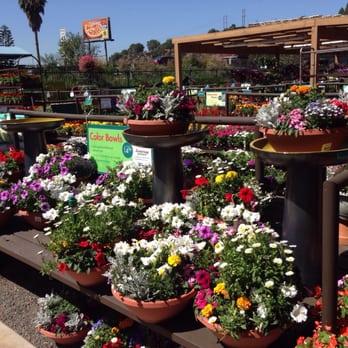 Armstrong Garden Centers 121 Photos 50 Reviews Gardening Centres 10320 Friars Road San