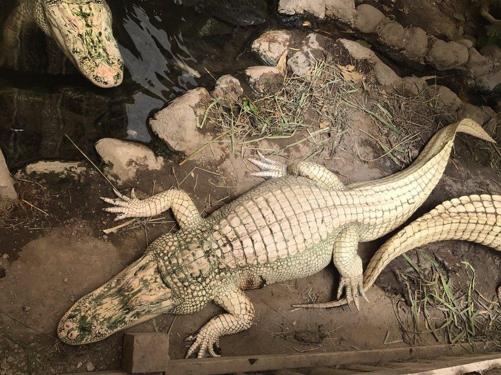 Colorado Gators Reptile Park: 9162 County Rd 9 N, Mosca, CO