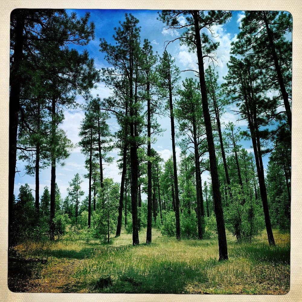 Woodland Lake Park: Woodland Lake Rd, Pinetop-Lakeside, AZ