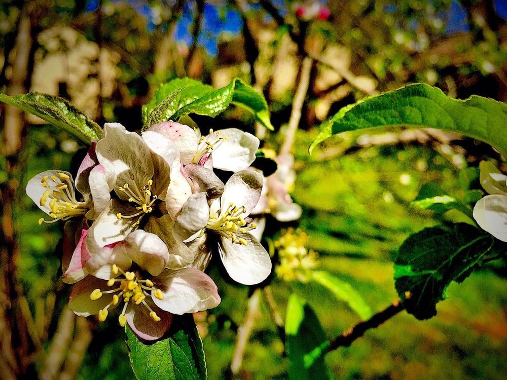 Walnut Grove Plantation: 1200 Otts Shoals Rd, Roebuck, SC