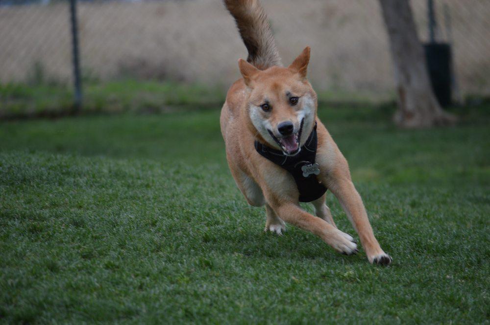 Pasadena Hundepark ohne Leine