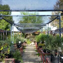 Photo Of The Living Desert S Palo Verde Garden Center Palm Ca United