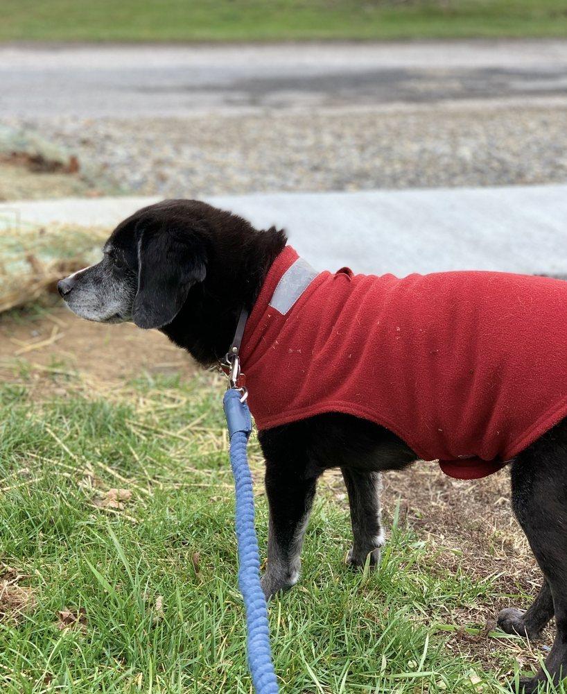 Zae's Pet Sitting & Dog Walking: York, PA