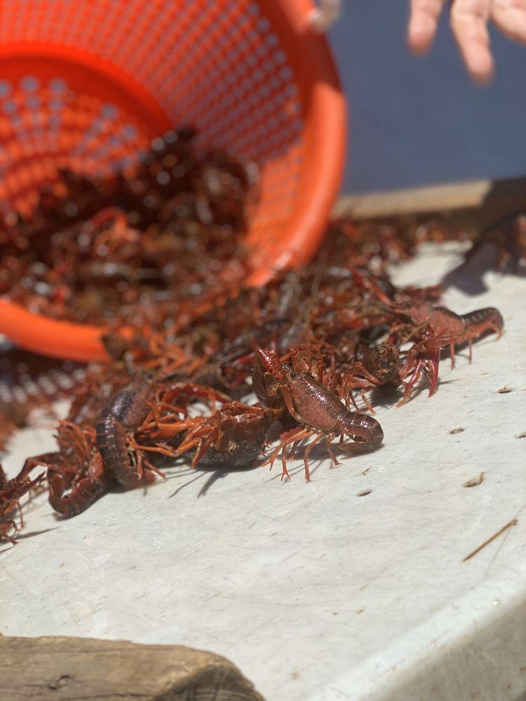 Red Mountain Crawfish: 195 Vulcan Rd, Homewood, AL