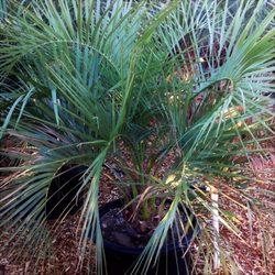 Photo Of Gdnc Cactus Desert Plant Nursery Hot Springs Ca United