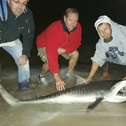 Off The Beach Shark Fishing Trips 20 Photos 322