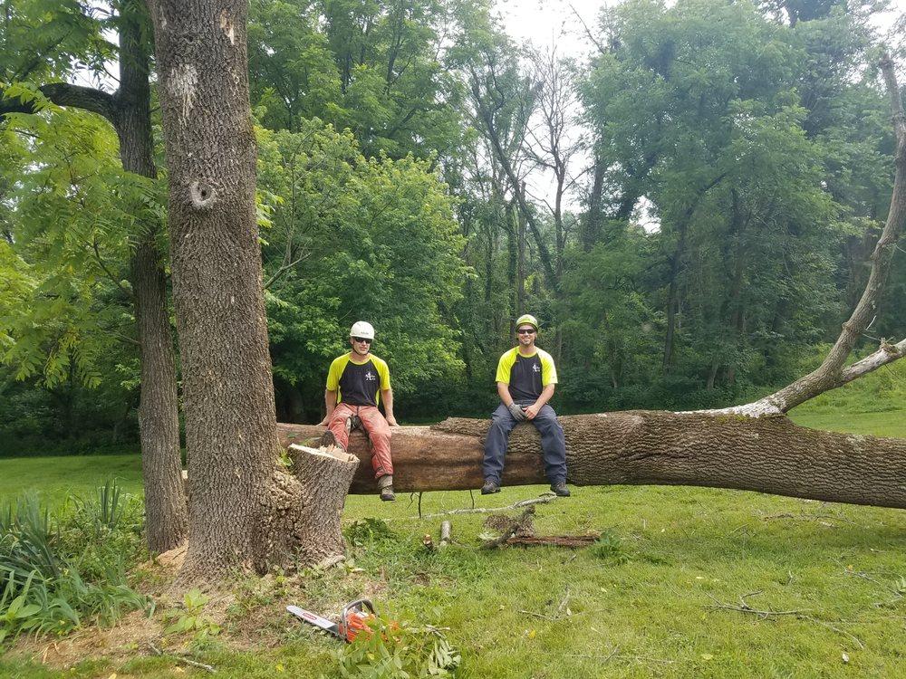 Arbor Artist, Inc.: 13370 Taylorstown Rd, Leesburg, VA