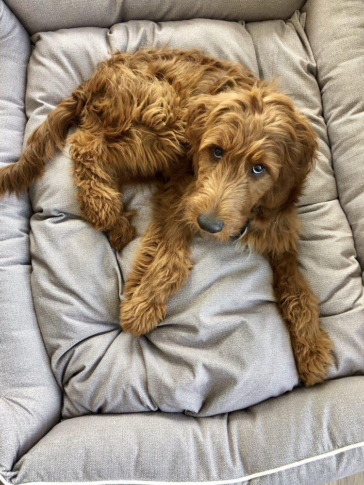 Yuppy Puppy: 970 N Shore Dr, Lake Bluff, IL