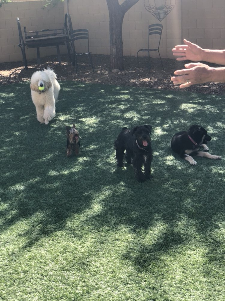 Pawfect Pet & House Sitter: Anthem Way, Phoenix, AZ