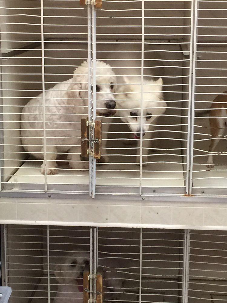 Beverlys Dog Grooming Salon