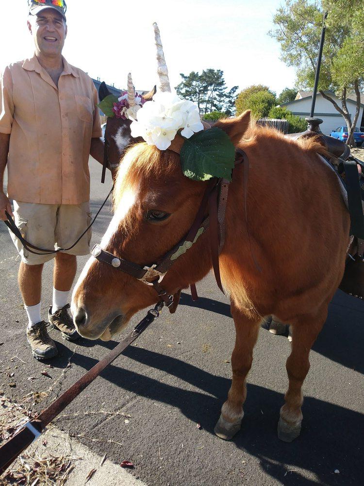 Ponies R US: 1300 Christie Rd, Martinez, CA