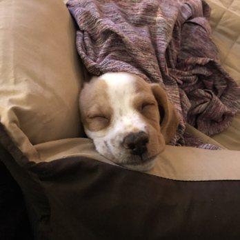 Pet Connect Rescue - 13 Photos & 25 Reviews - Animal