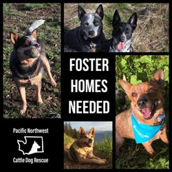 Pacific Northwest Cattle Dog Rescue - Request a Quote - Pet ...
