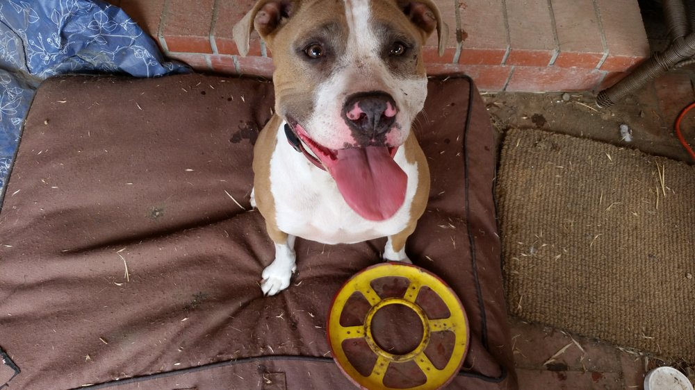 Pets Love Amy: Wilmington, DE