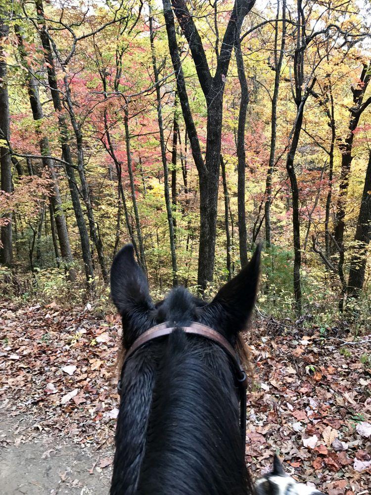 Horseshoe Creek Riding Stables: 1386 Stewart Rd, Andrews, NC