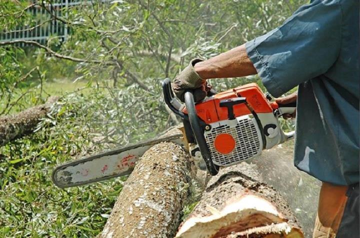 Giffin's Tree Service: 207 Walnut St, Circleville, OH