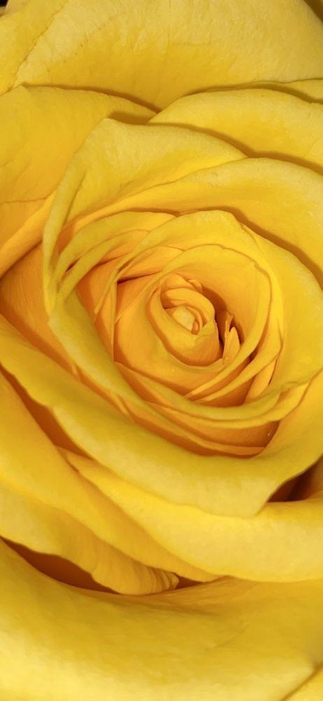 Wright Ideas Flowers & Sweet Shoppe: 410 N Park Dr, Broken Bow, OK