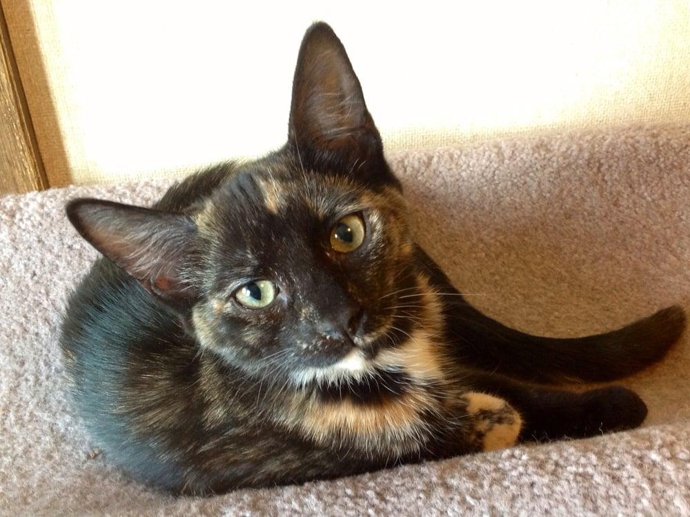 cheshire cat bodysuit