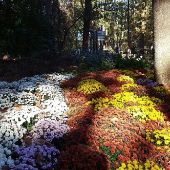 Photo Of Garvan Woodland Gardens   Hot Springs, AR, United States.  Beautiful Flowers