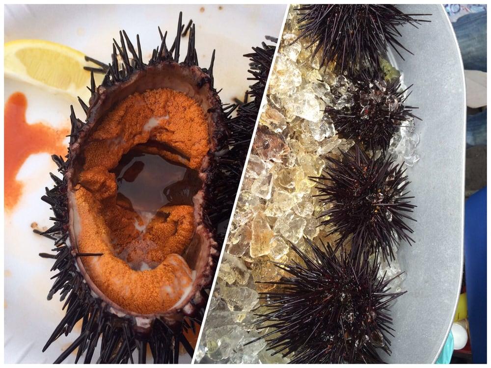 Super fresh sea urchin yelp for Fresh fish company