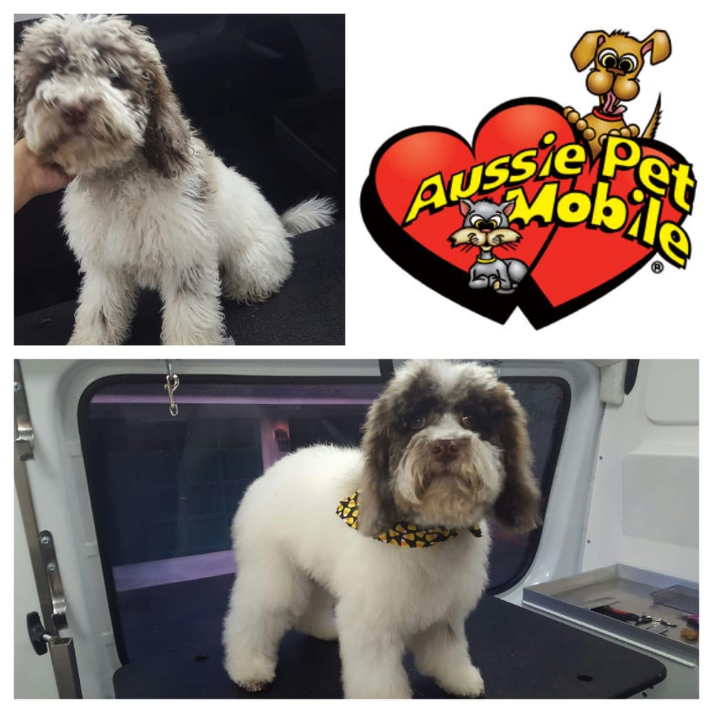 Aussie Pet Mobile Main Line Chester County