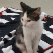 Central Oklahoma Humane Society - Animal Shelters - 4522 NW