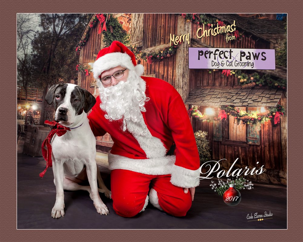 Perfect Paws Dog and Cat Grooming: 502 Chester Pike, Norwood, PA
