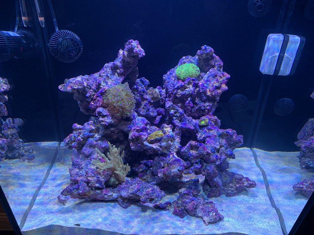 Aquastudios Aquariums: 4750 S Colony Blvd, The Colony, TX