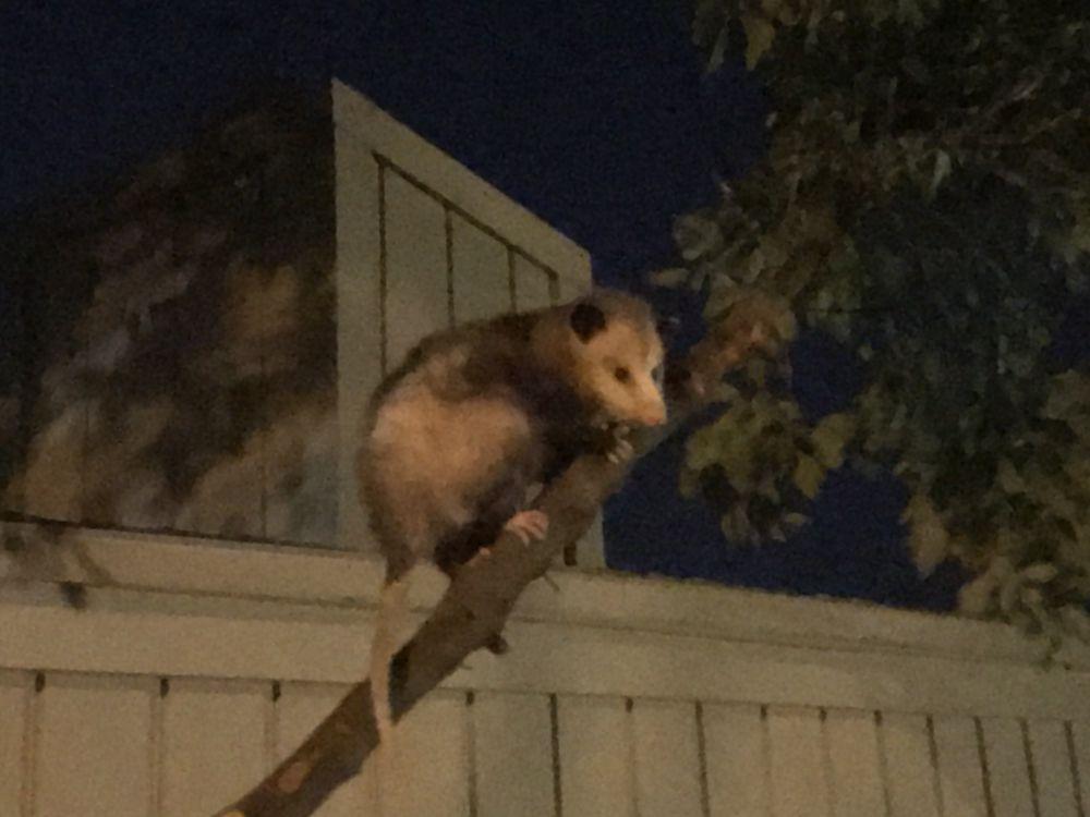 Critter Guys Wildlife: Fern Park, FL