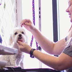 Central Ohio Dog Grooming
