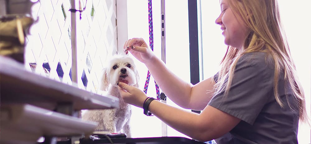 central ohio dog grooming academy - pet groomers - 7598 e main st ...