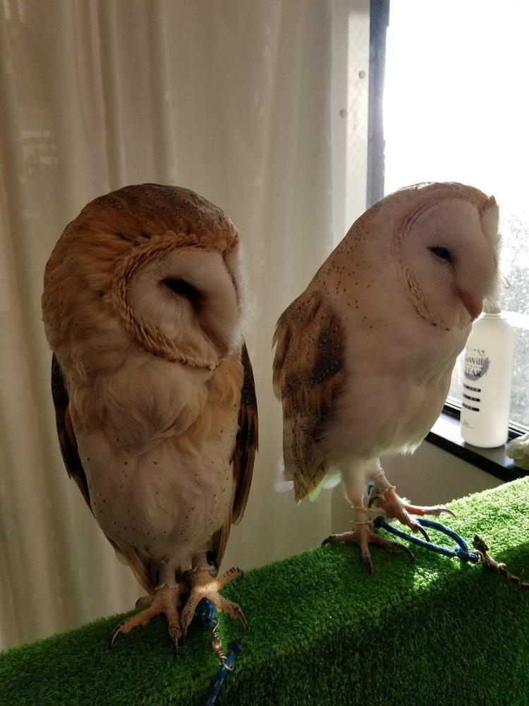 harry potter owls yelp