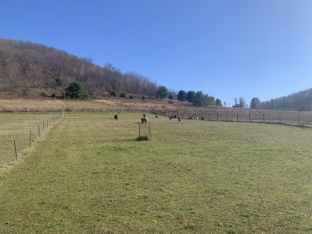 Cinco C's Alpacas: 198 Sartwell Creek Rd, Port Allegany, PA