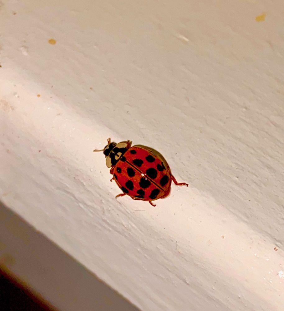 Phoenix Pest and Wildlife Control: 298 E Columbia St, Danville, IN
