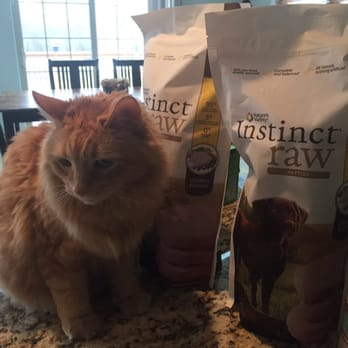 Best Cat Vets In Janesville Wi