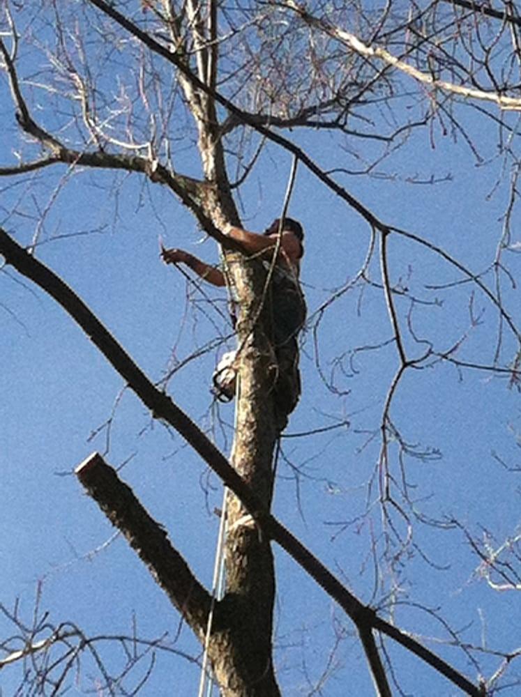 Mr Tree Service: 9901 Jones Creek Rd, Dittmer, MO