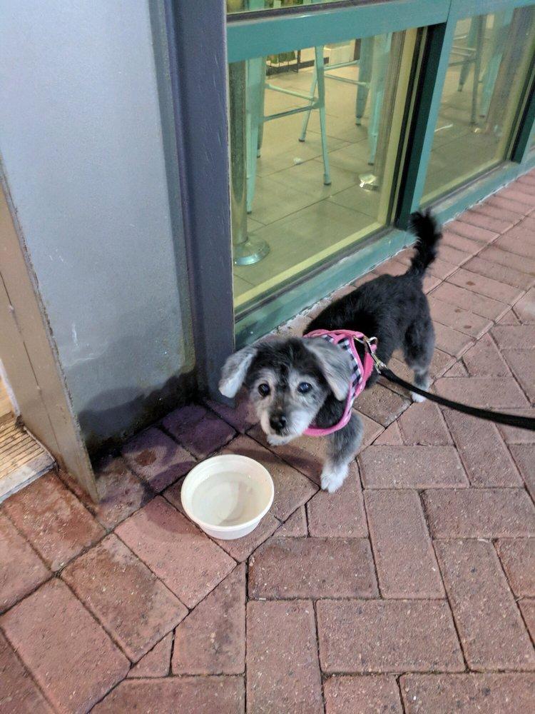 Gentle Touch Dog Grooming: 3147 Ravenwood Dr, Falls Church, VA
