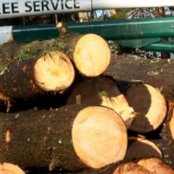 Photo Of Johnson S Tree Service Carmel Ny United States