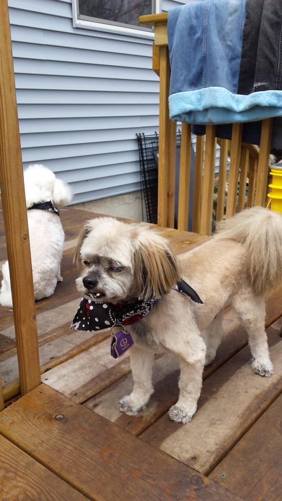 Bark-N-Bubble Pet Grooming Salon: 1402 Broadway St, Alexandria, MN