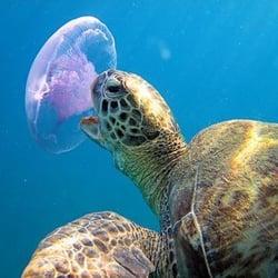 Photo Of Snorkel Panama City Beach Fl United States Jellyfish