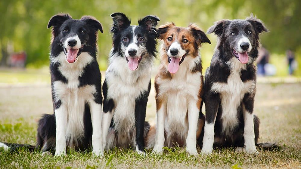 Alberta Veterinary Clinic: 2521 10th St E, Tuscaloosa, AL